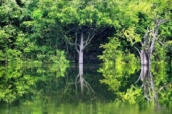 7 atrações turísticas no Brasil - Florestas tropicais da Amazônia